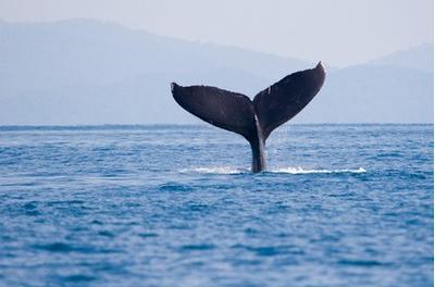 Baleias de Puntarenas